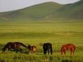 坝上草原春天景色