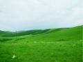 坝上草原草滩
