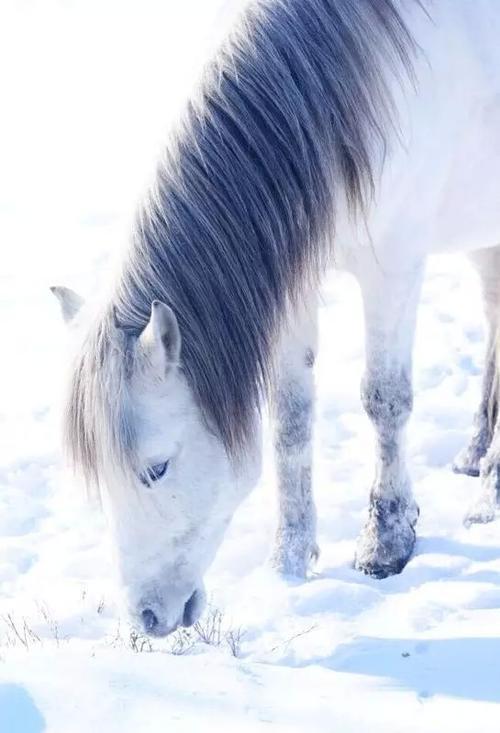 坝上草原冬季景色