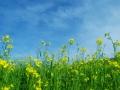 坝上草原夏季景色