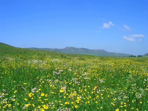 坝上草原-金莲滩