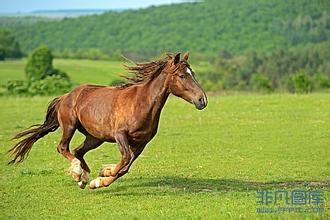 草原上的马是人类最好的朋友